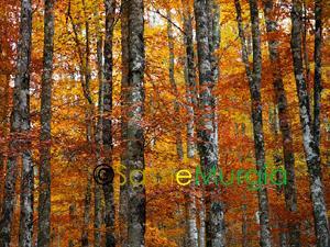 Sei-su-immagine-raffigurante-boschi-parco-nazionale-del-pollino