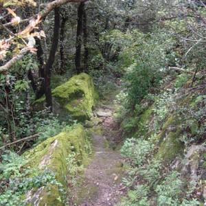 sei-su-immagine-raffigurante-il-sentiero-che-conduce-alla-madonna-della-loe-tra-piante-rigogliose