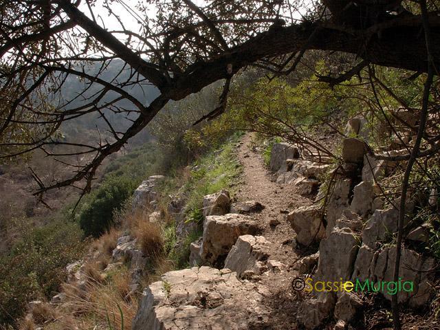 sei-su-immagine-raffigurante-uno-stretto-sentiero-che-si-snoda-lungo-il-corso-sinuoso-della-gravina-di-picciano