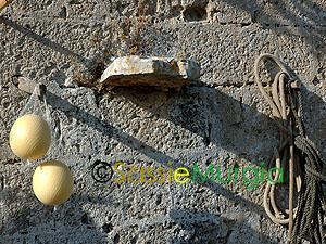 sei-su-immagine-raffigurante-caciocavallo-podolico-tipico