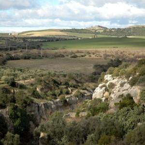 sei-su-immagine-raffigurante-avucchiare-e-ulivi-secolari-nel-cuore-del-parco-naturale-della-murgia-materana