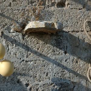 sei-su-immagine-raffigurante-caciocavallo-podolico-appeso-al-muro-di-una-stalla